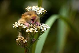 Happy mouse BRE