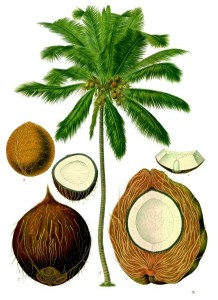Coconut healthy hepatitis