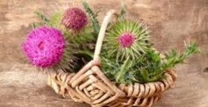 milk thistle hepatitis cirrhosis